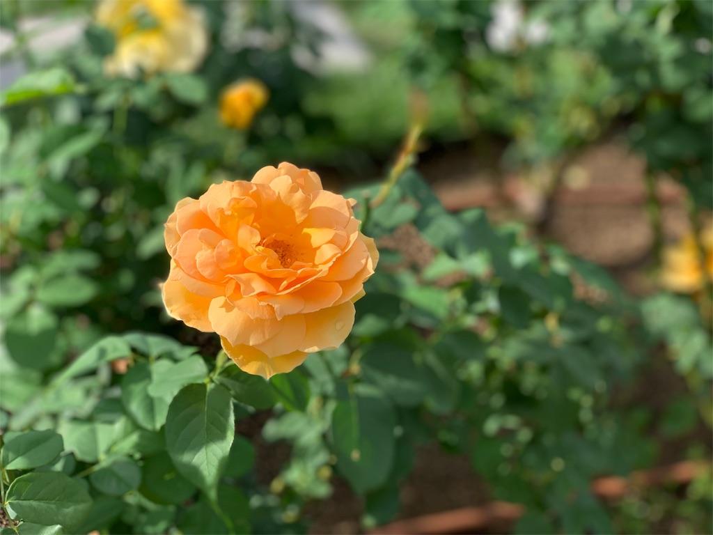 f:id:asagao-nikki:20191022182738j:image