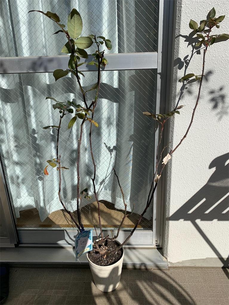 f:id:asagao-nikki:20210111161236j:image