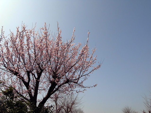 f:id:asagaya_densho:20130416115658j:image
