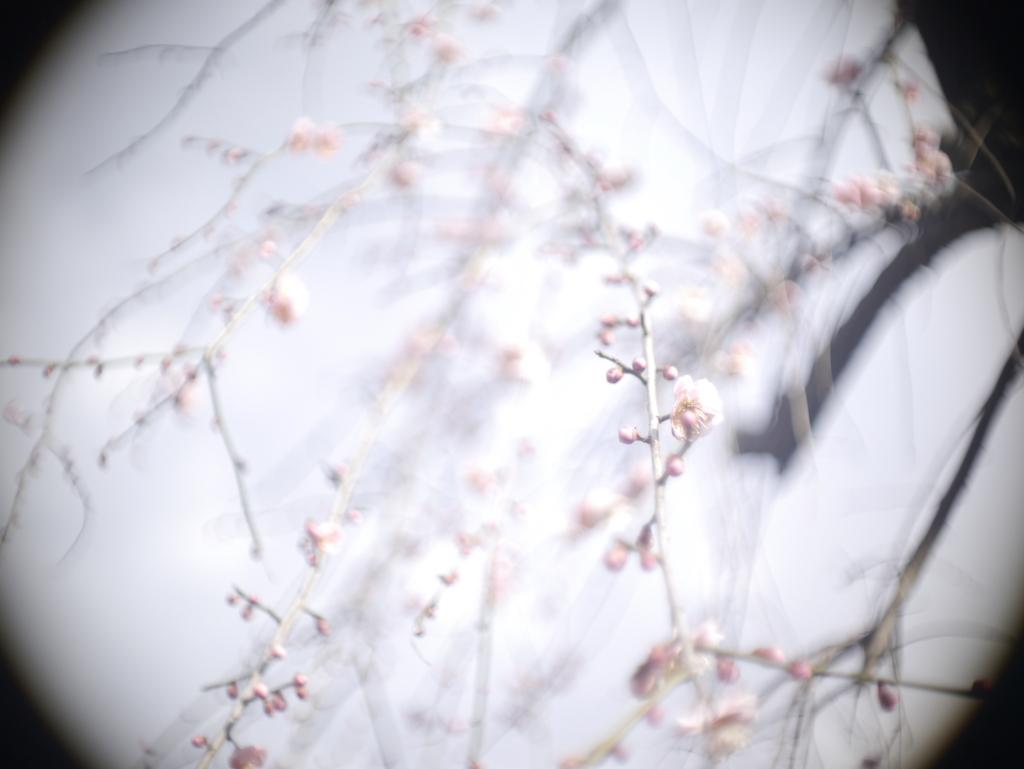 f:id:asahaka1:20180311215615j:plain