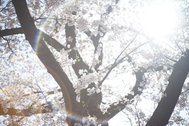 f:id:asahaka1:20181231214350j:image