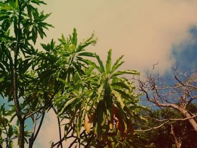 20141026_plant2.jpg