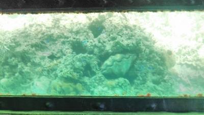 20141109_glassboat4.jpg