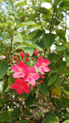 20141109_taketomi_flower1.jpg