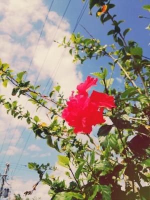 20141109_taketomi_flower7.jpg