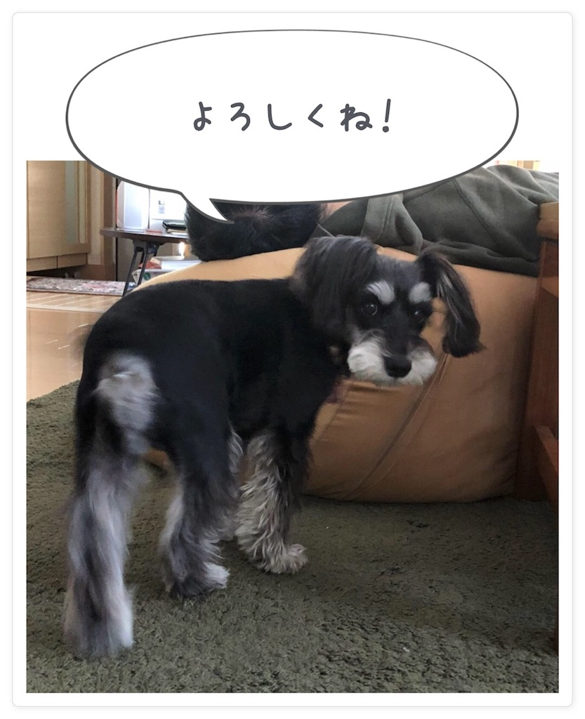 f:id:asahi-diet:20180402110513j:image