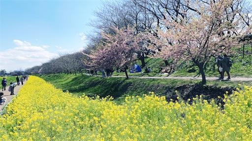 f:id:asakatomoki:20200327071344j:image
