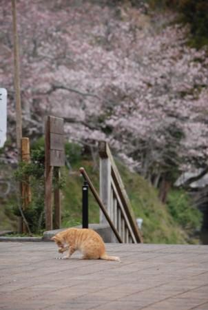 f:id:asakaze:20120331063101j:image