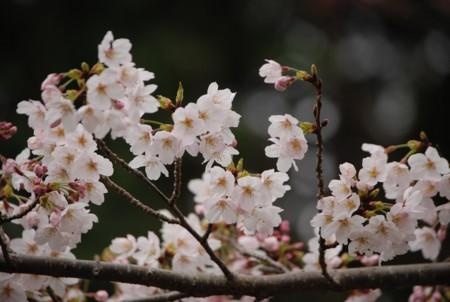 f:id:asakaze:20120331070128j:image