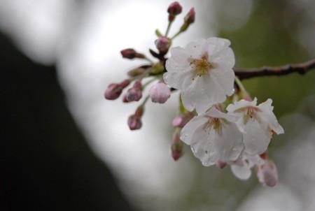 f:id:asakaze:20120331133603j:image