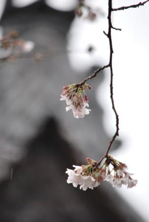 f:id:asakaze:20120331140023j:image