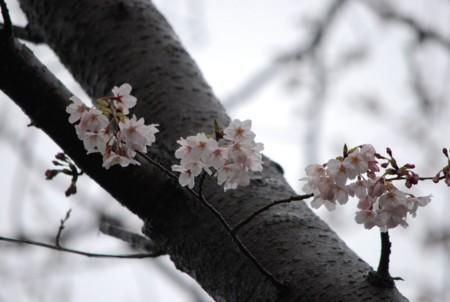 f:id:asakaze:20120331141412j:image