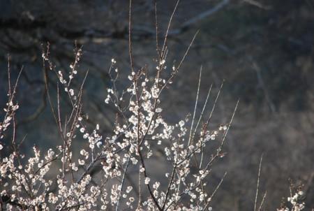 f:id:asakaze:20120401171415j:image
