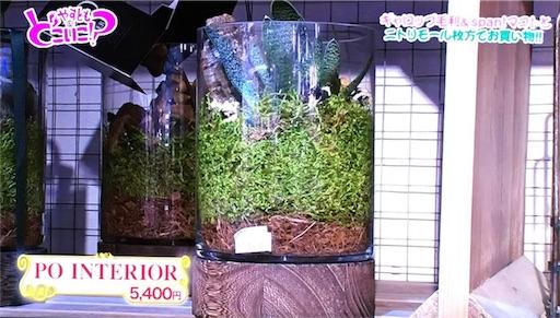 f:id:asako415:20170122135211j:image