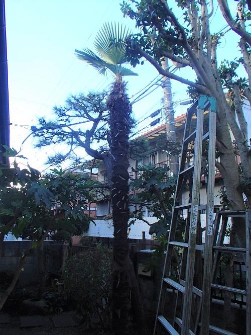 f:id:asakurahouse:20201130092229j:plain