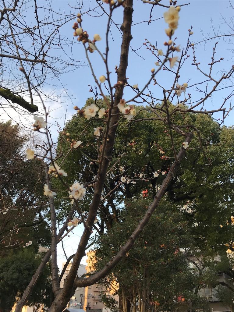 f:id:asakusa5809:20180118083759j:image