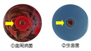 f:id:asakusasupple:20190330223751j:plain