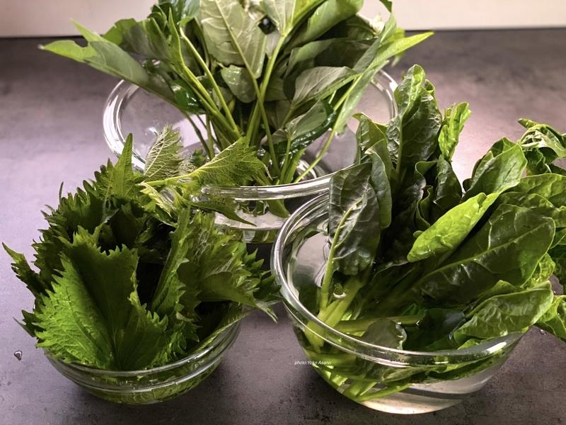 葉野菜の水揚げの写真