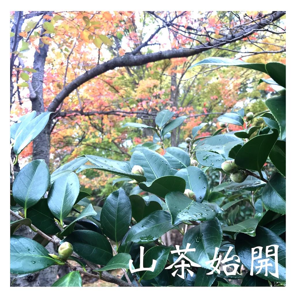 f:id:asanoha-manabiya:20201107213502j:image