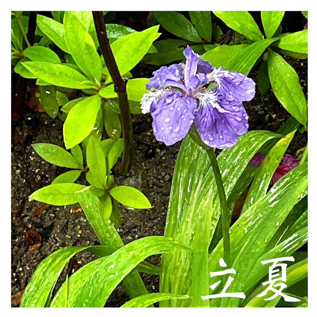 f:id:asanoha-manabiya:20210505223228j:image