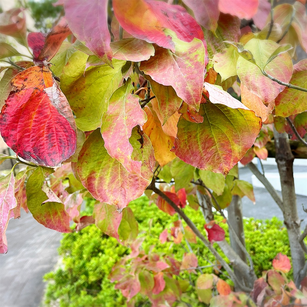 f:id:asanoha-manabiya:20211007165109j:image