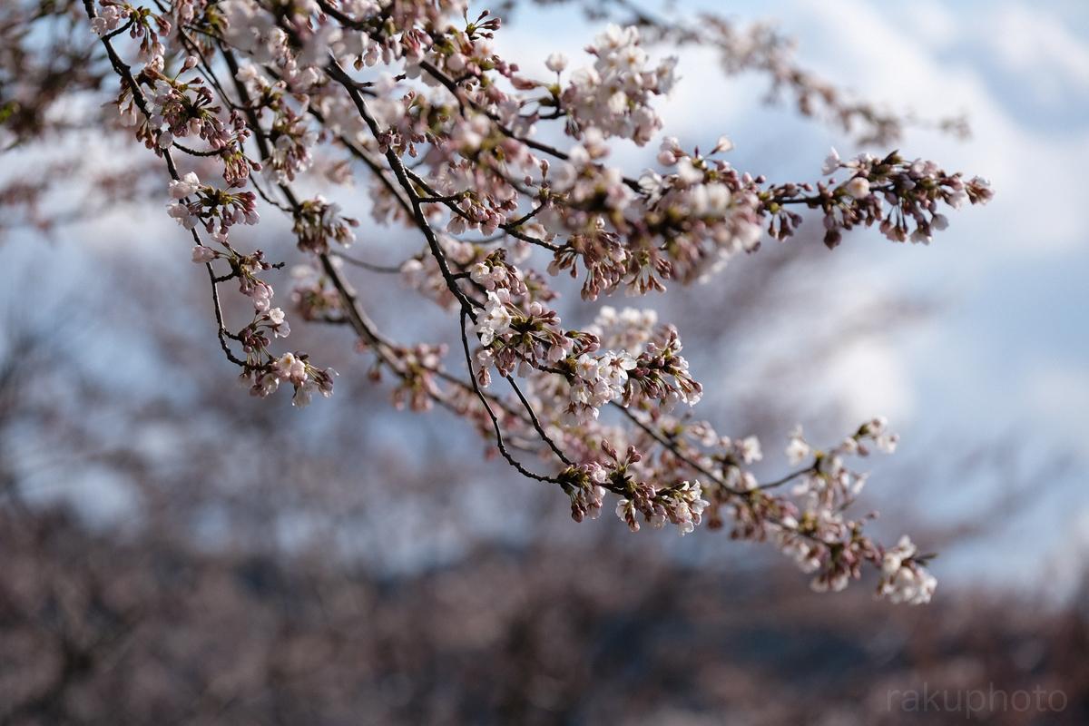 f:id:asanokawa:20190412200728j:plain