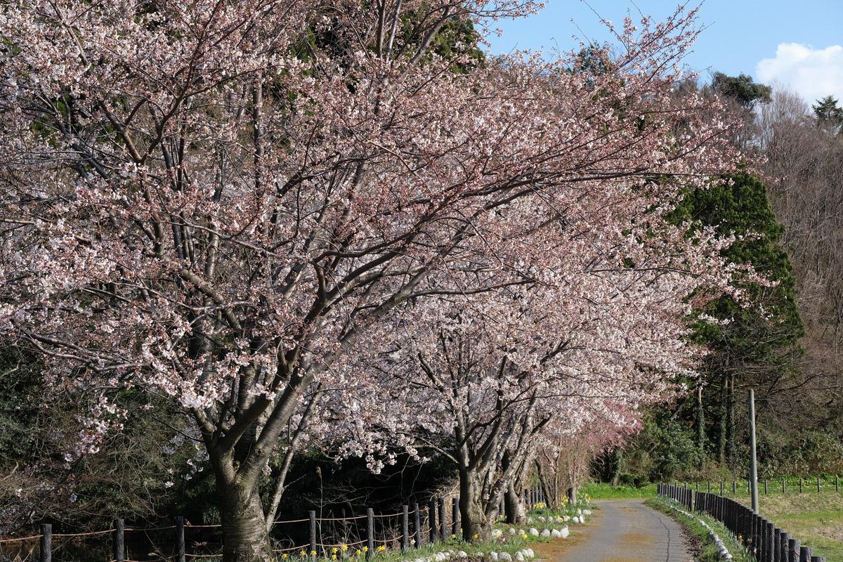 f:id:asanokawa:20190412200937j:plain