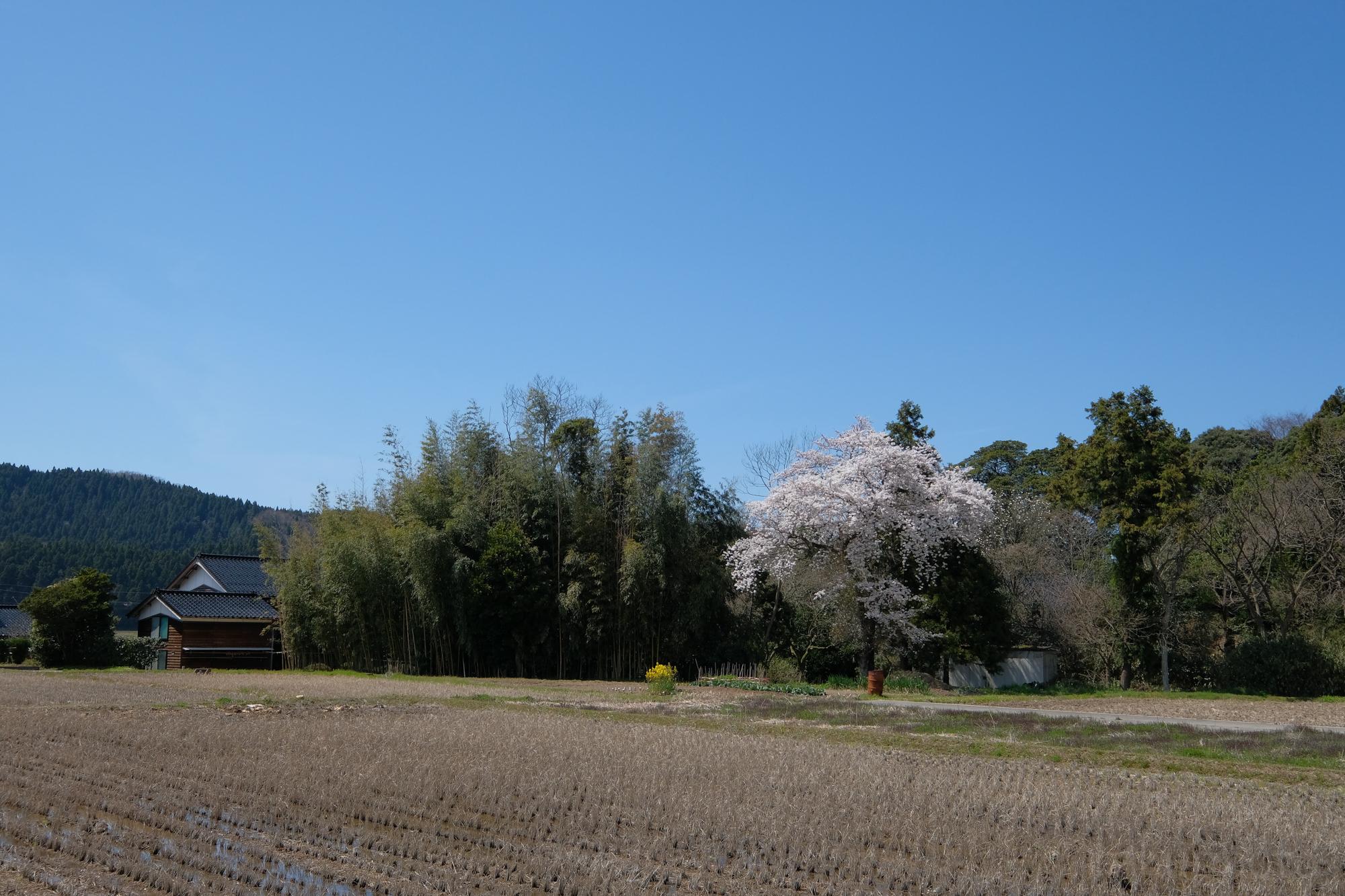 f:id:asanokawa:20190414202000j:plain