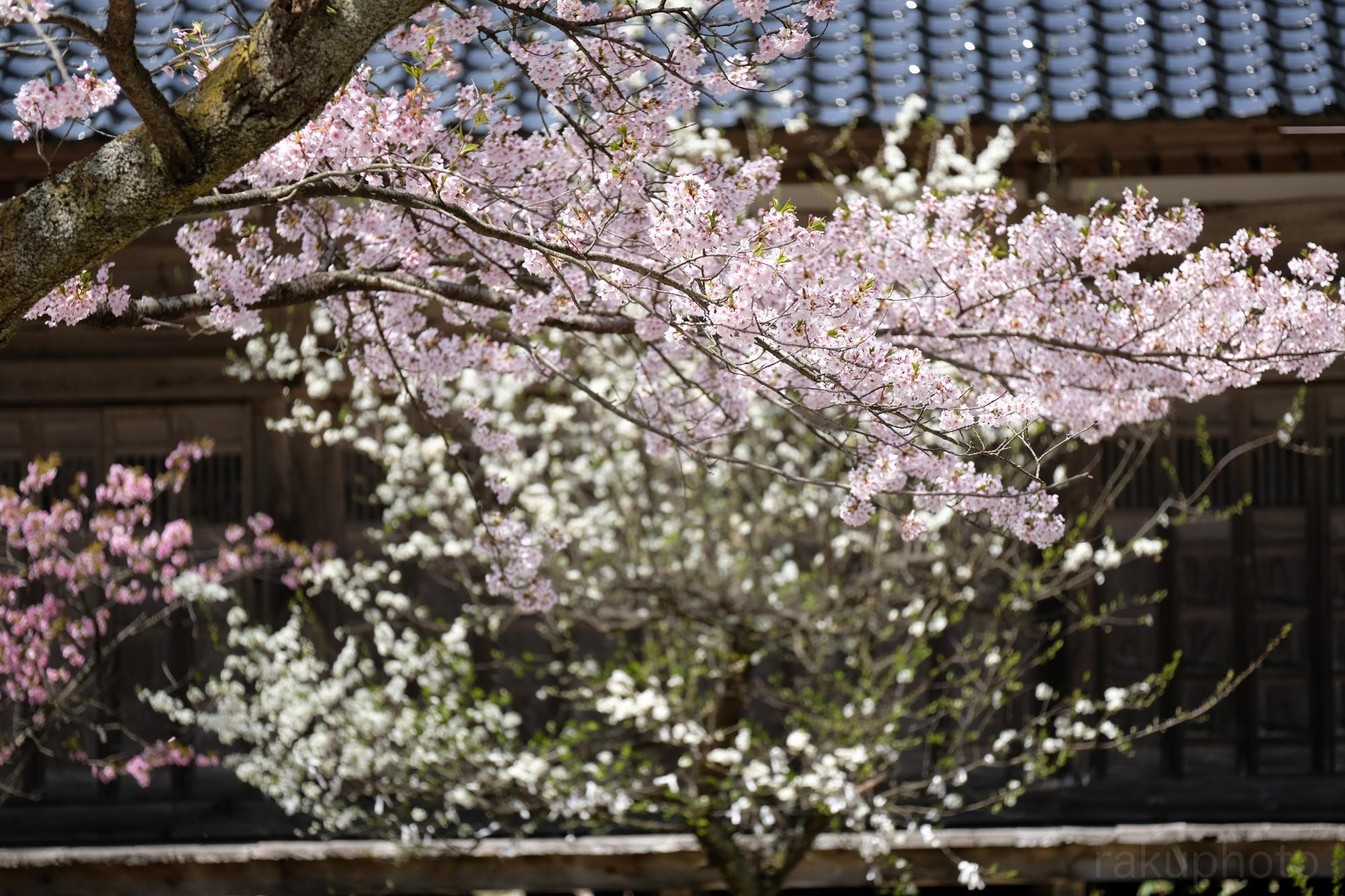 f:id:asanokawa:20190421171735j:plain