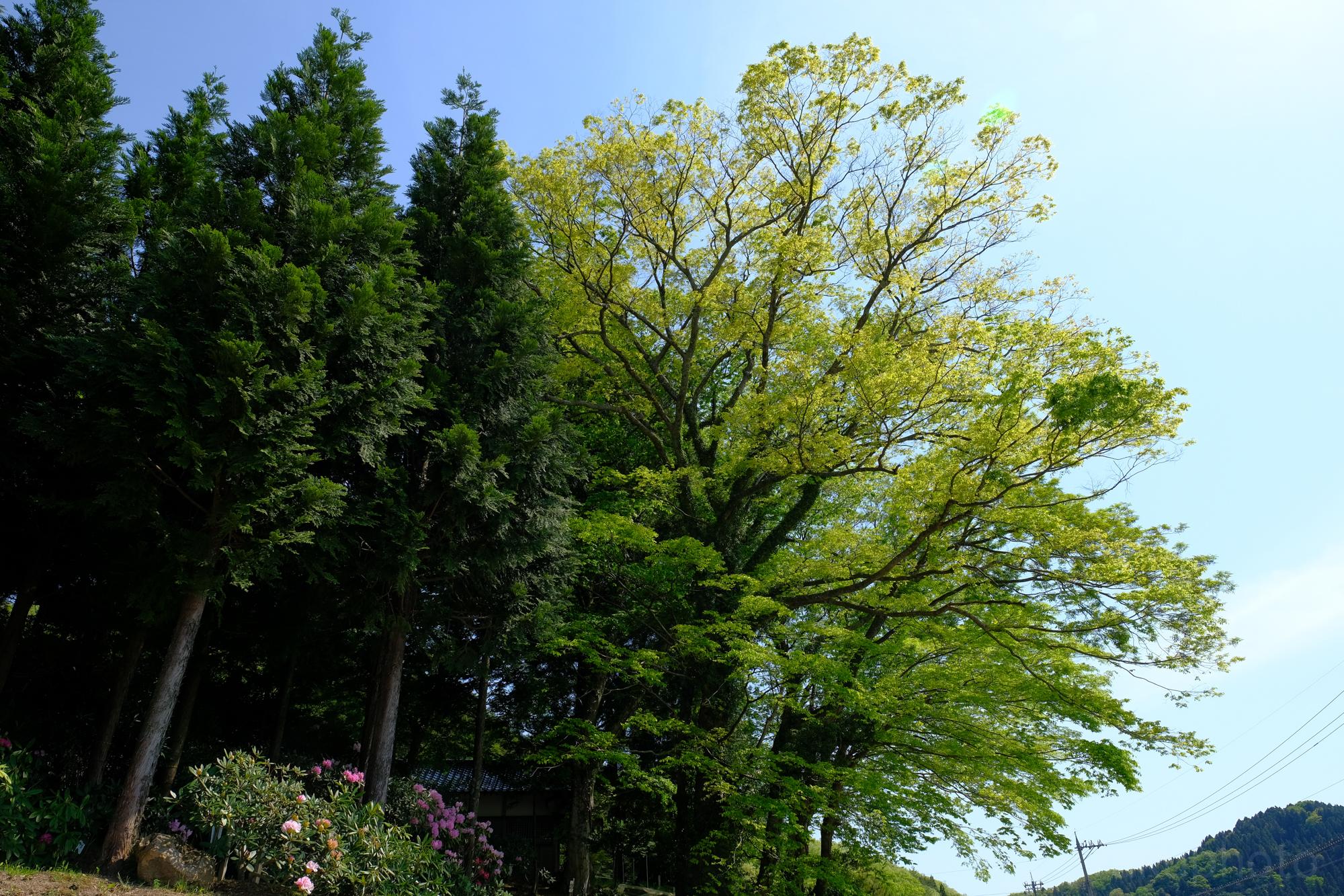 f:id:asanokawa:20190513202141j:plain