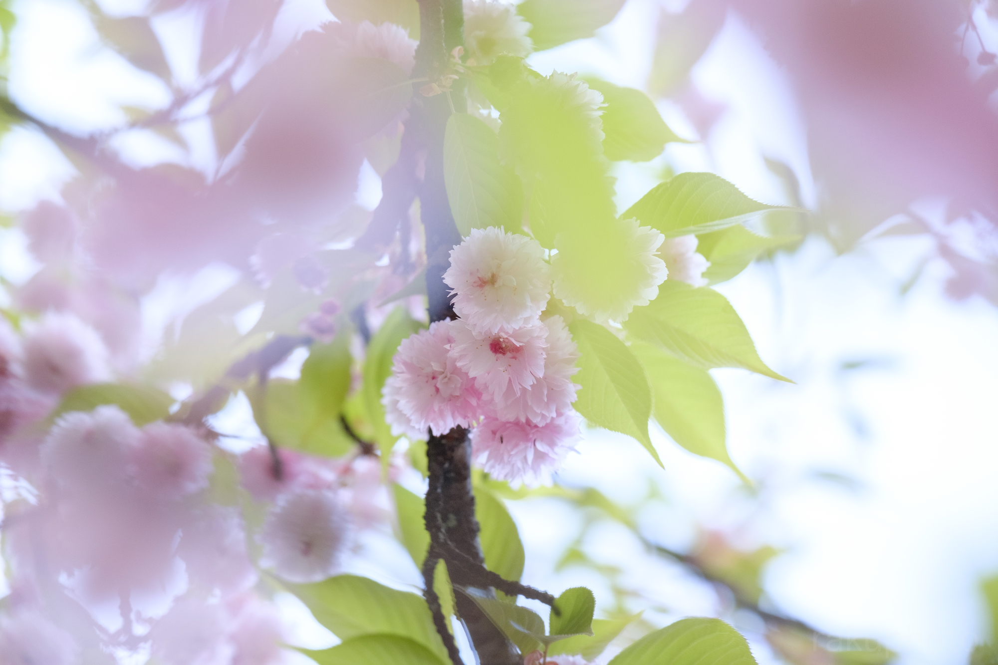 f:id:asanokawa:20190527175329j:plain