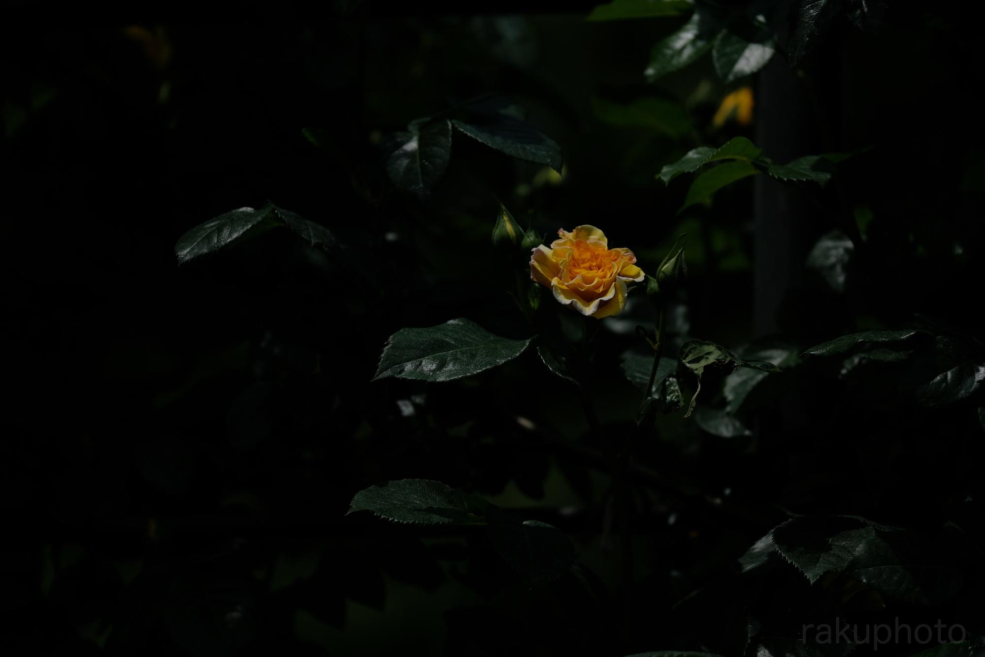f:id:asanokawa:20190527202335j:plain