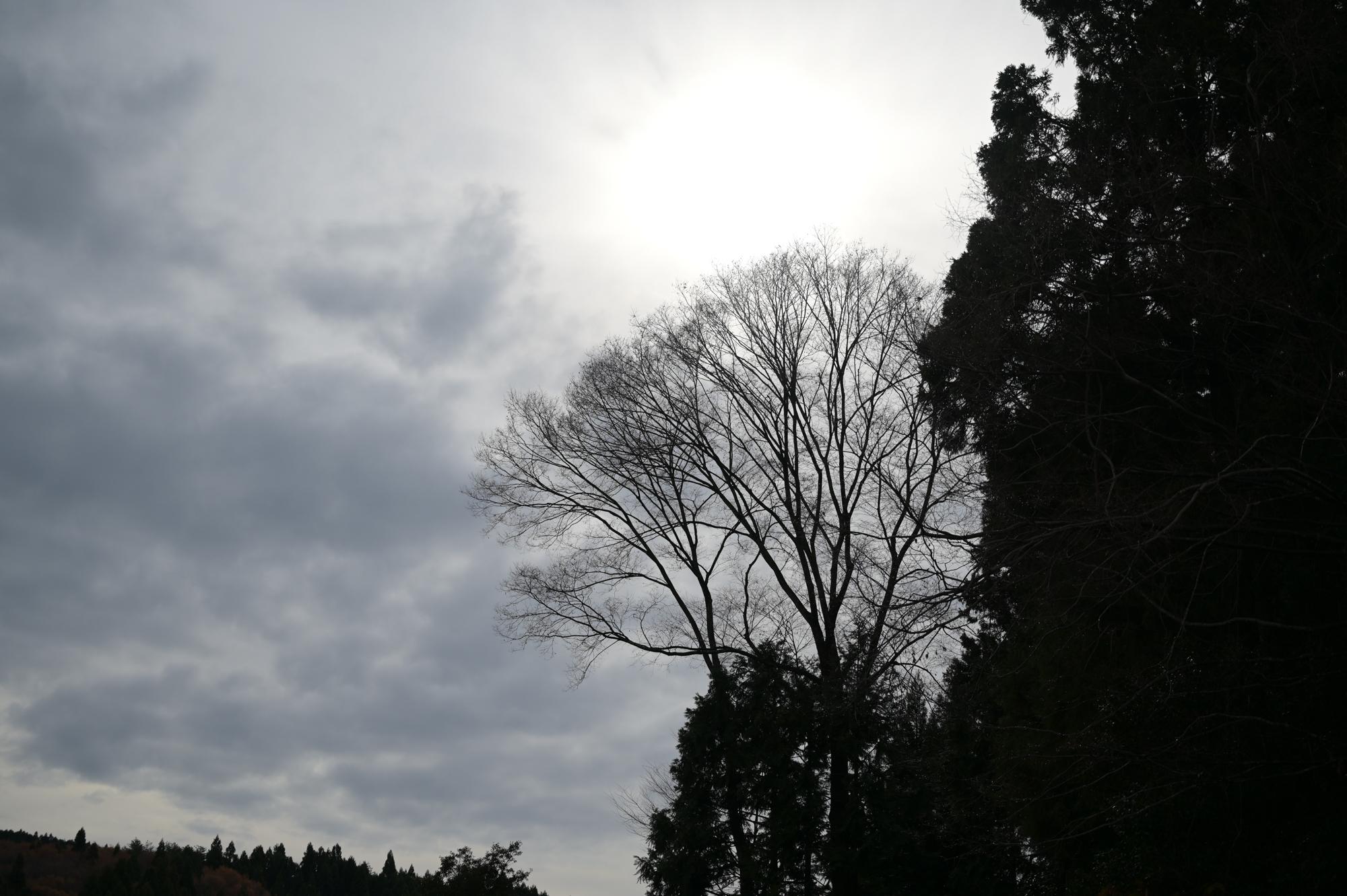 f:id:asanokawa:20191207172122j:plain