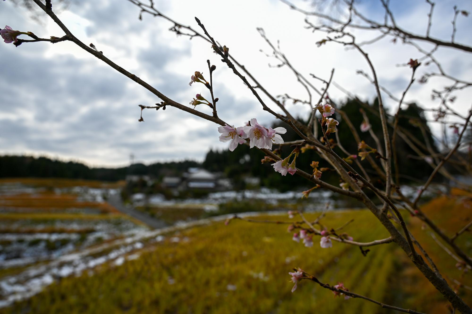 f:id:asanokawa:20191207172137j:plain