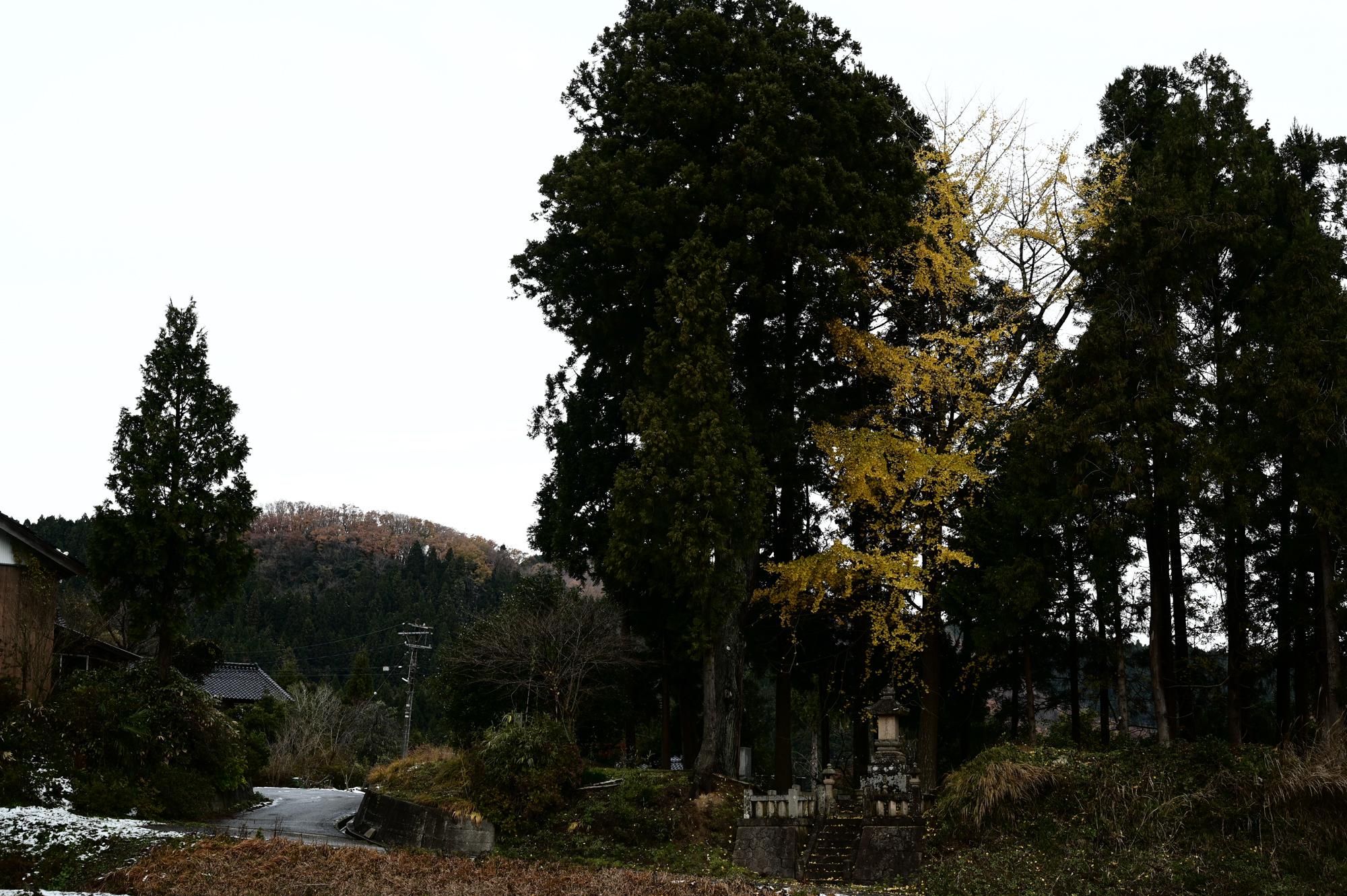 f:id:asanokawa:20191207172201j:plain