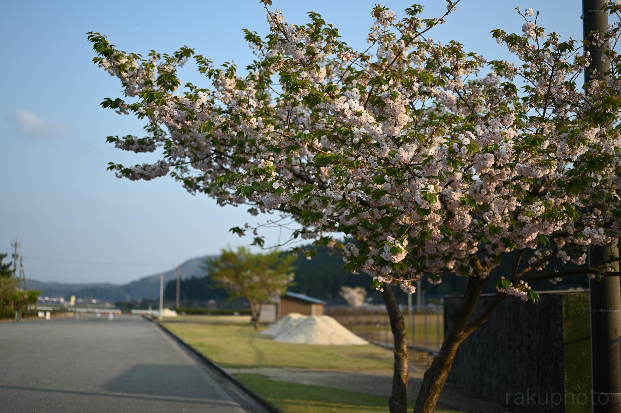 f:id:asanokawa:20200501185919j:plain