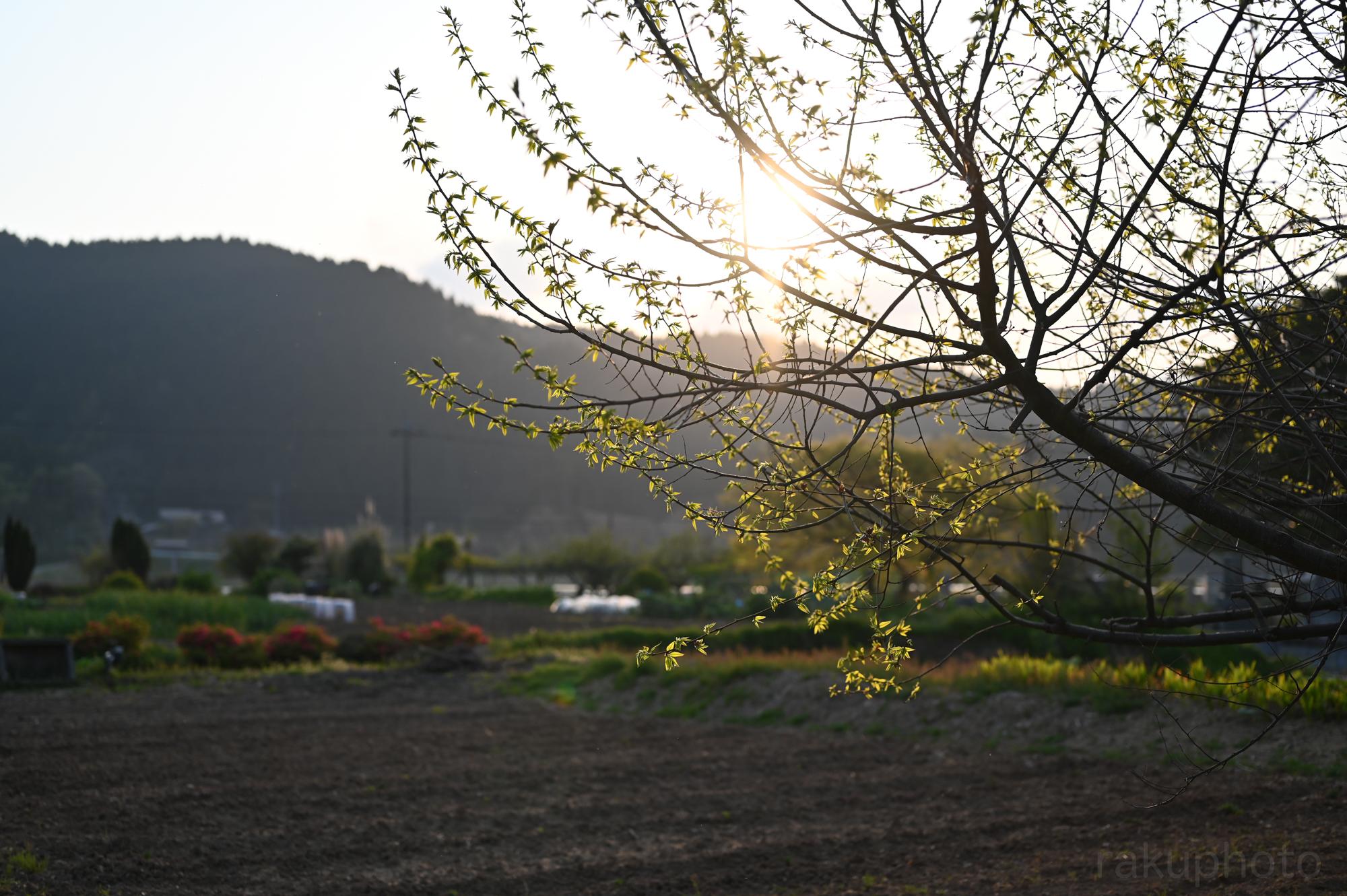 f:id:asanokawa:20200501190033j:plain