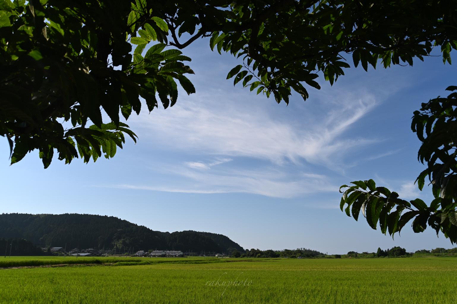 f:id:asanokawa:20200818163553j:plain