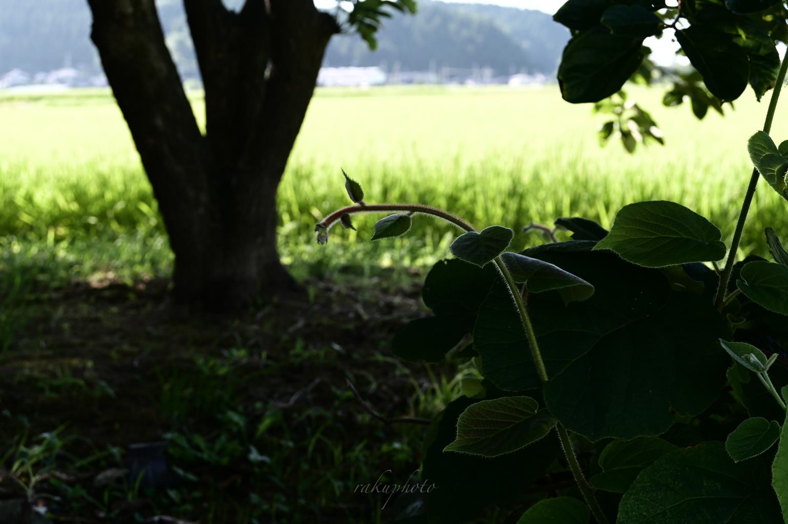 f:id:asanokawa:20200818163638j:plain