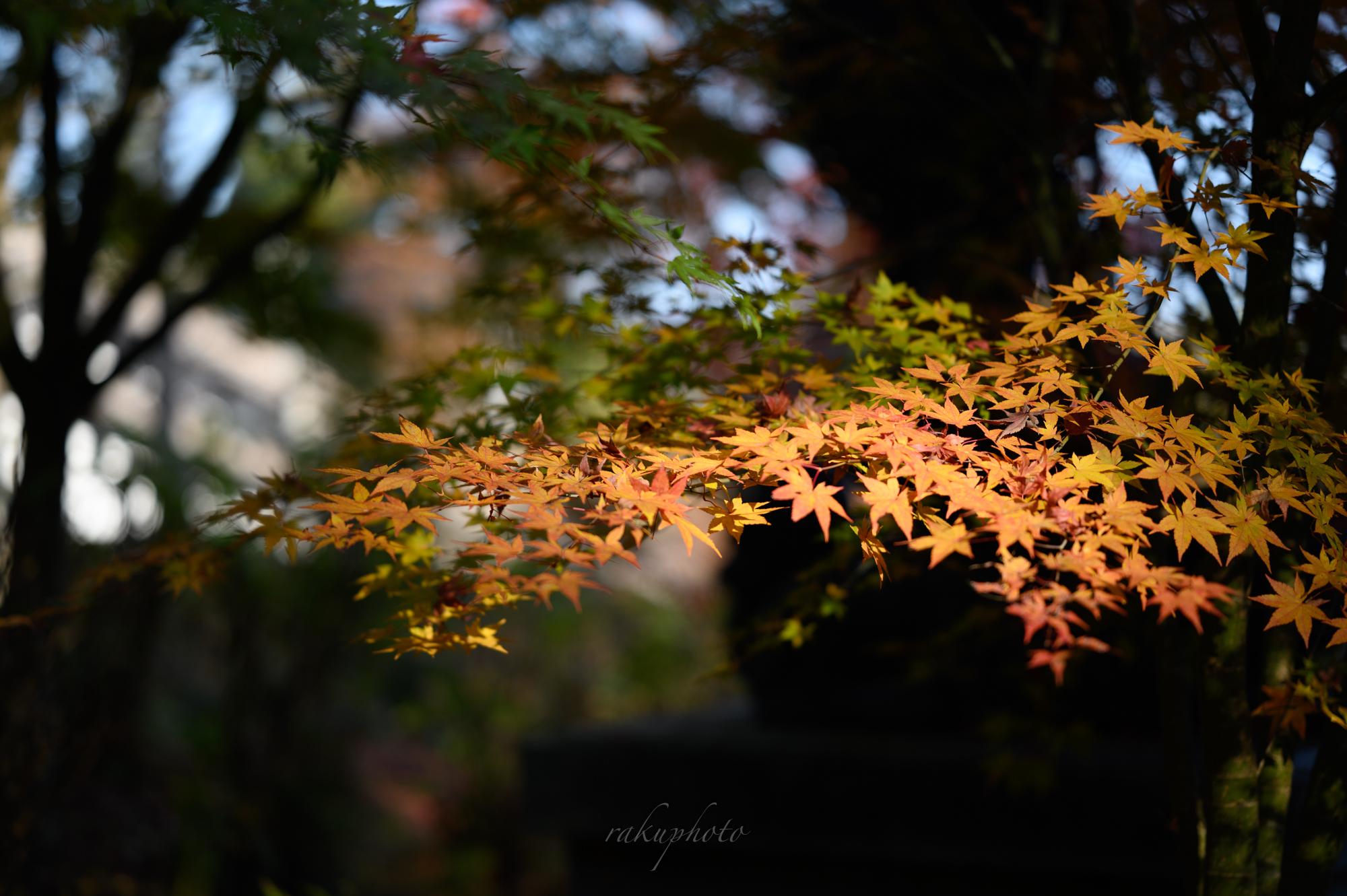 f:id:asanokawa:20201112181112j:plain