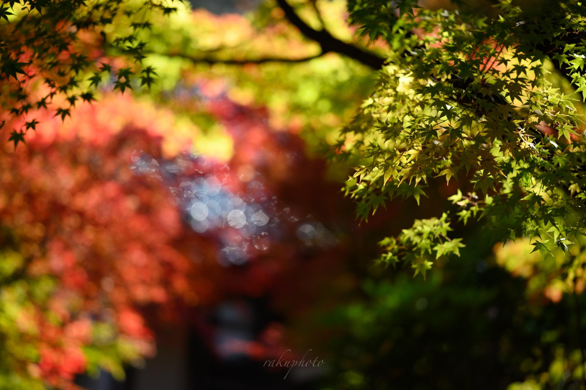 f:id:asanokawa:20201112181132j:plain