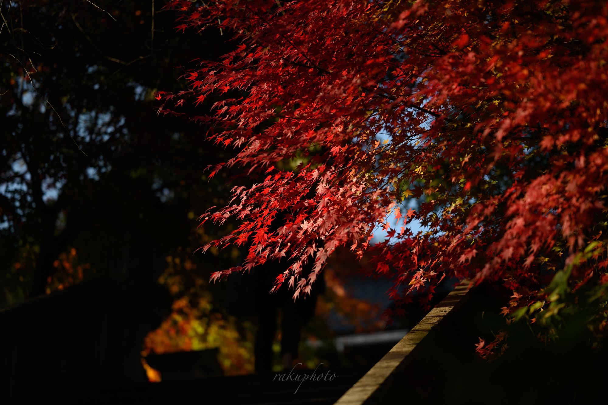 f:id:asanokawa:20201112181213j:plain