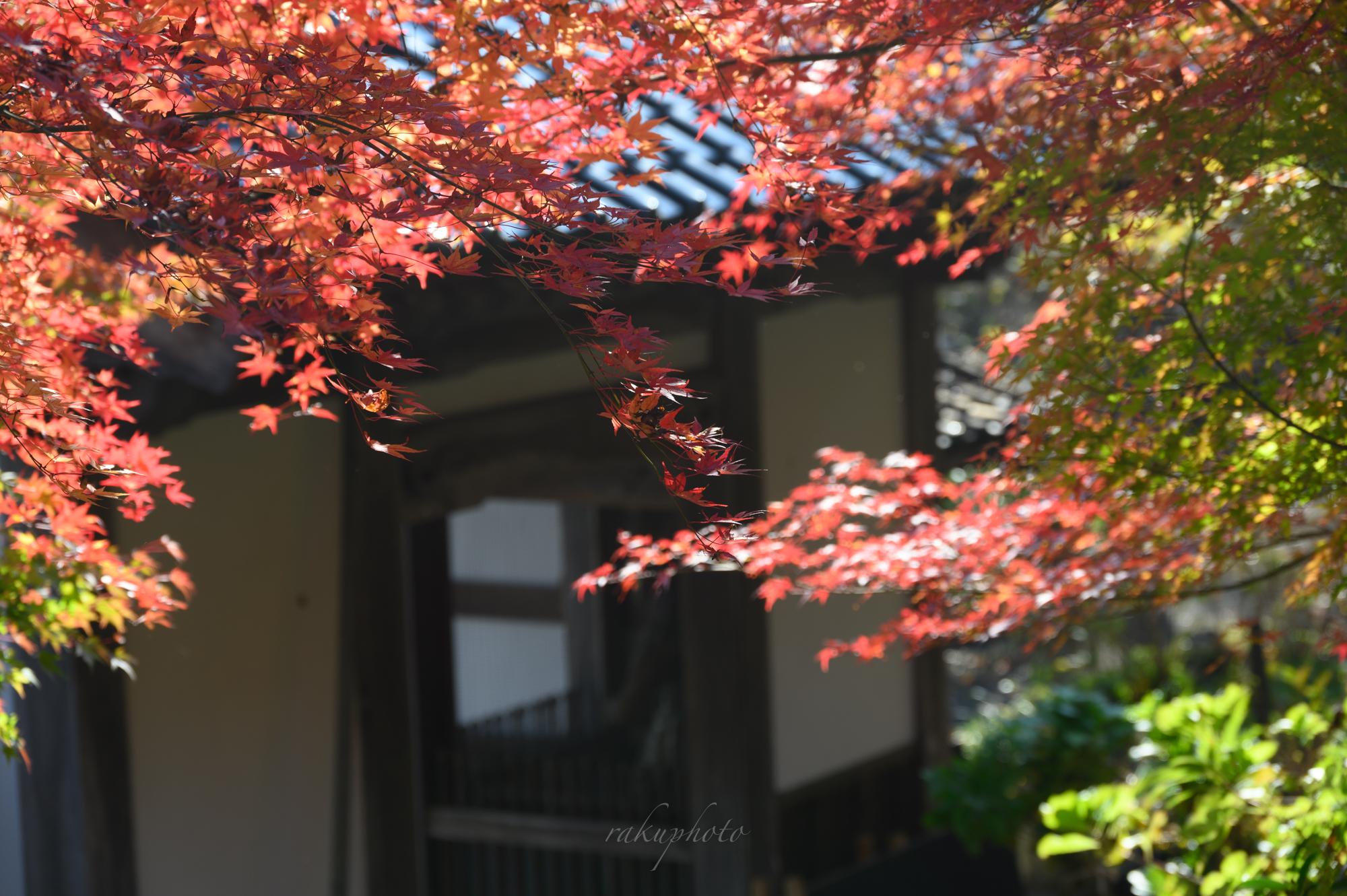 f:id:asanokawa:20201115190918j:plain