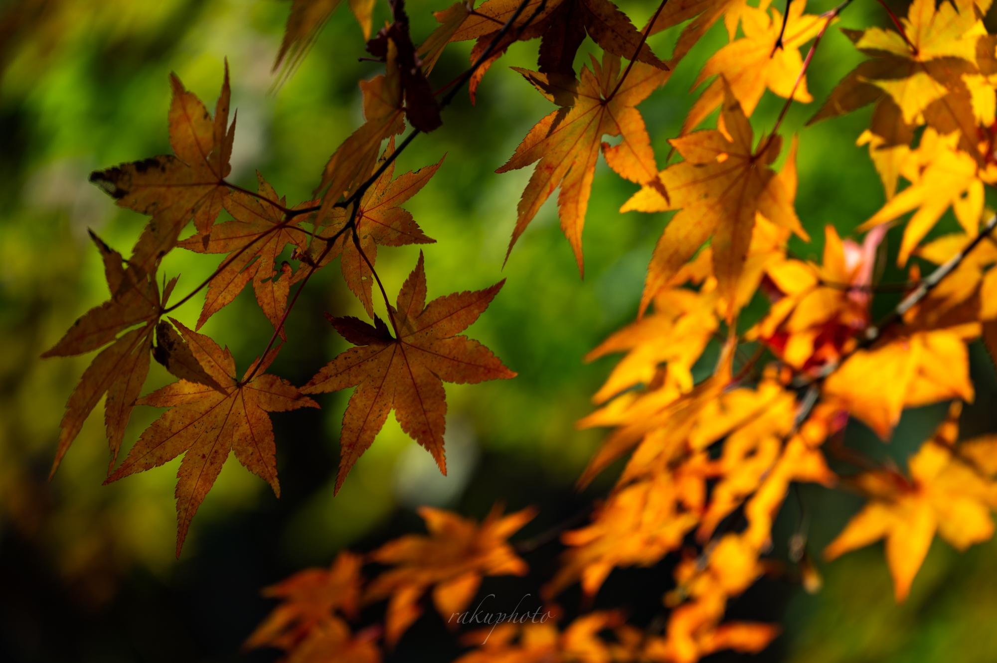 f:id:asanokawa:20201115190927j:plain
