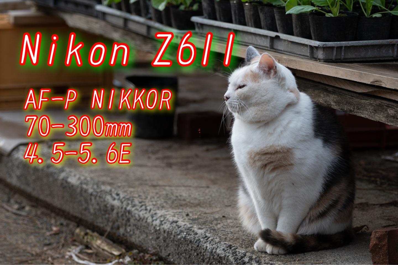 f:id:asanokawa:20210223162313j:plain
