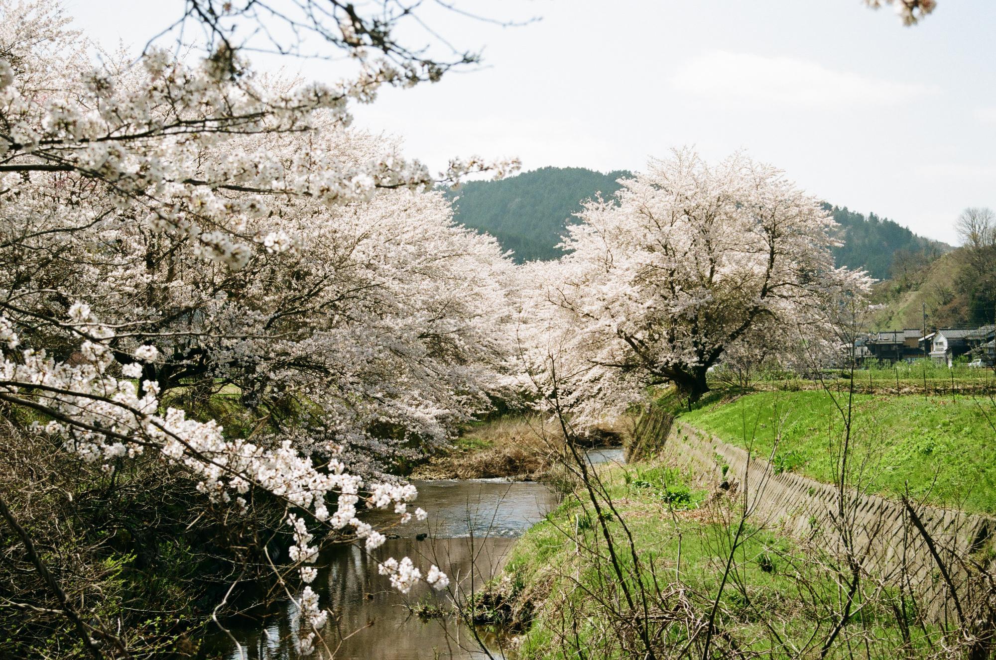 f:id:asanokawa:20210419141338j:plain