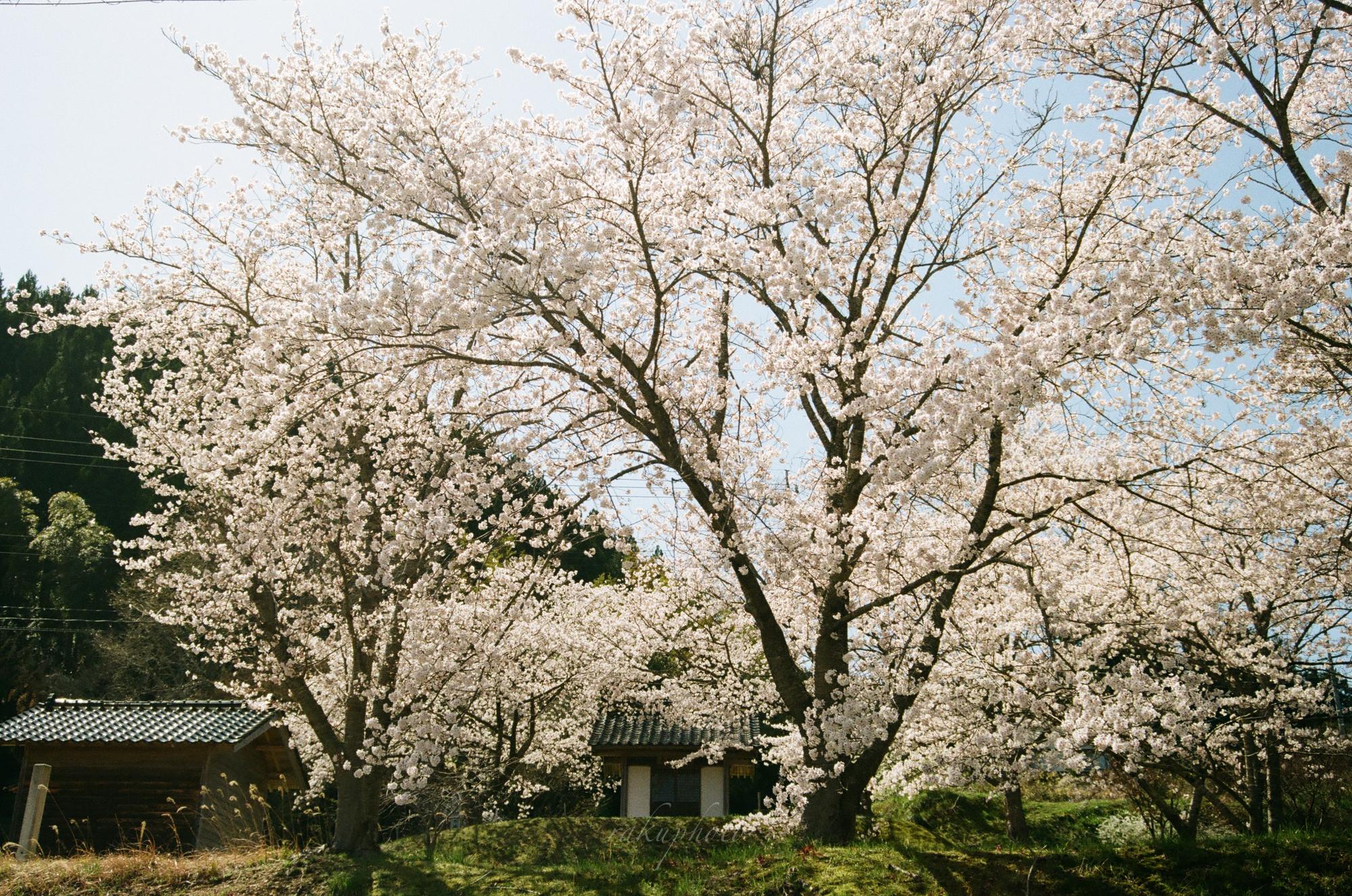 f:id:asanokawa:20210419141536j:plain