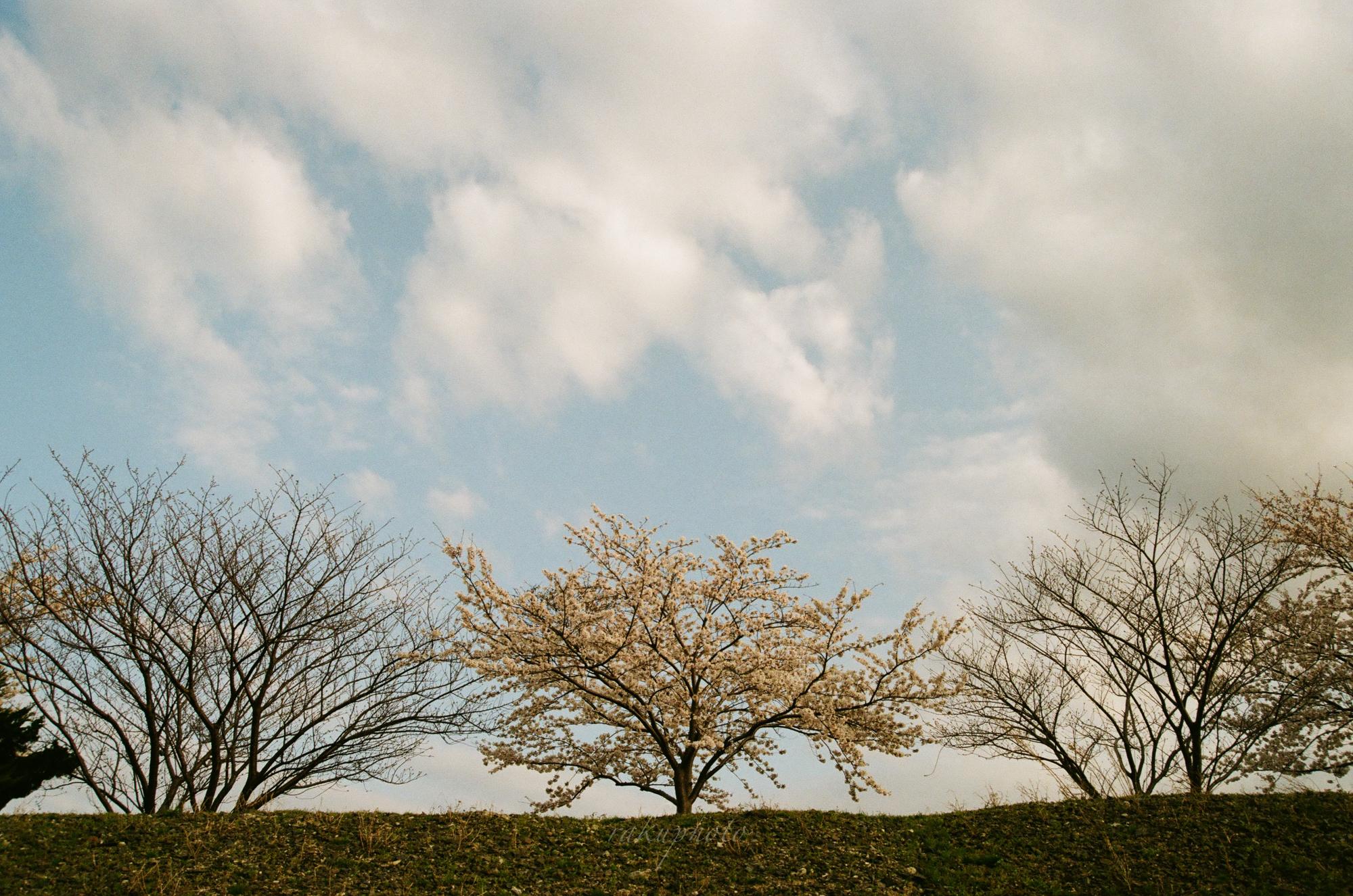 f:id:asanokawa:20210419141646j:plain