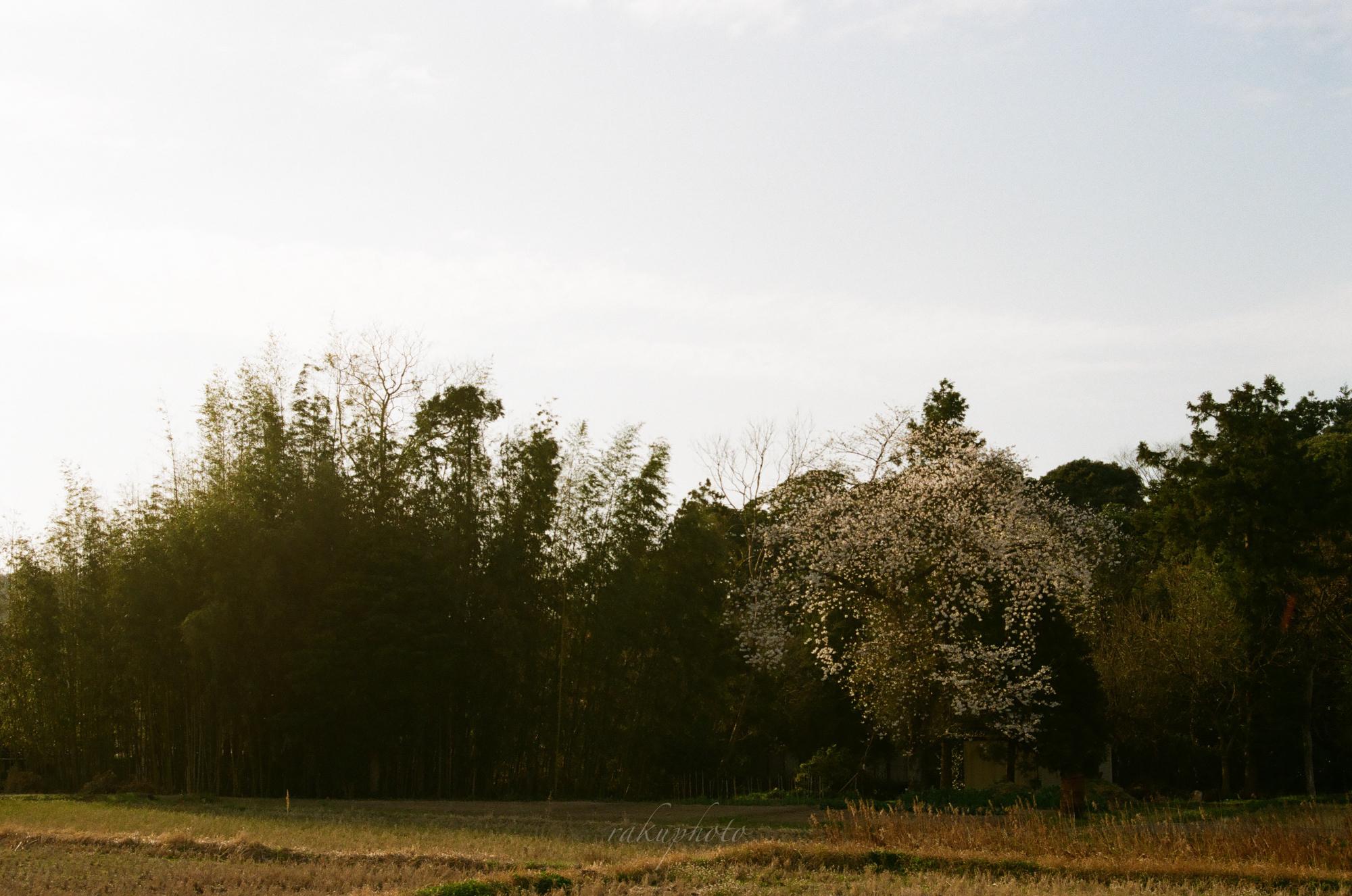 f:id:asanokawa:20210419141953j:plain