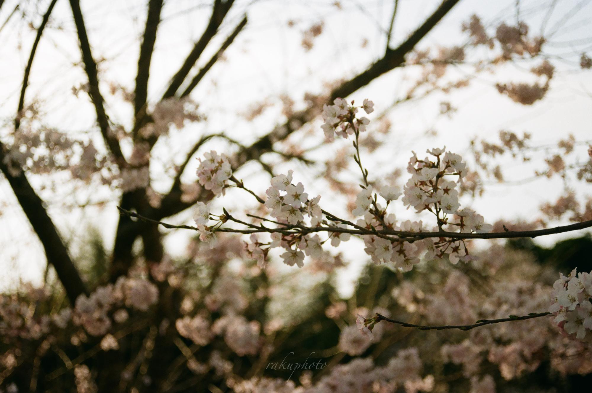 f:id:asanokawa:20210419142023j:plain